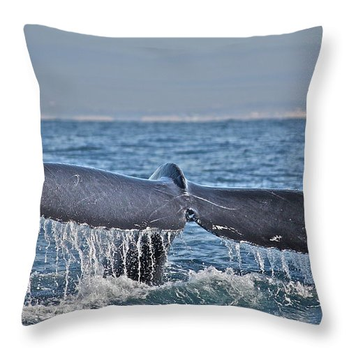 Whale Throw Pillow featuring the photograph A Whale Of A Tale by Diana Hatcher