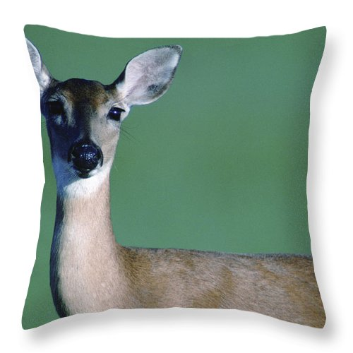 White-tailed Deer Throw Pillow featuring the photograph A White-tailed Deer On The Prairie by Joel Sartore