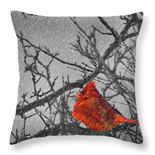 Ohio Throw Pillow featuring the photograph A Winter Wonder by Kenneth Krolikowski