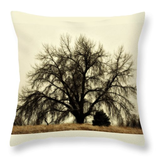 Tree Throw Pillow featuring the photograph A Winter's Day by Marilyn Hunt