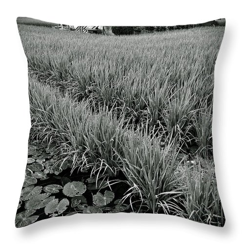 House Throw Pillow featuring the photograph Abandoned House by Dave Bowman