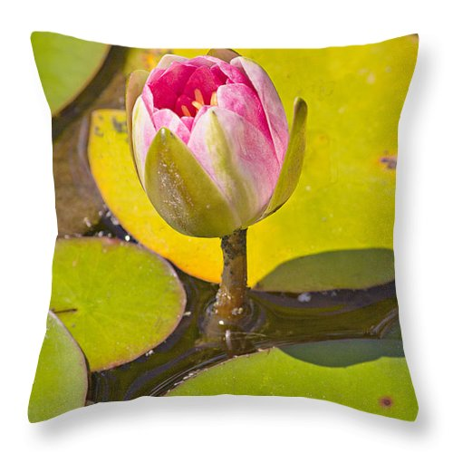 Flower Throw Pillow featuring the photograph About To Bloom by Peter J Sucy