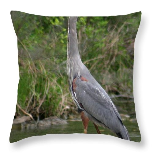 Crane Throw Pillow featuring the photograph About To Go In by David Dunham