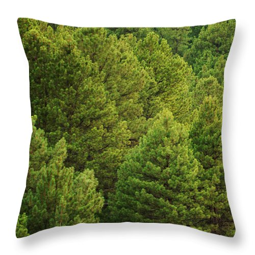 House Throw Pillow featuring the photograph Above It All by Jill Reger