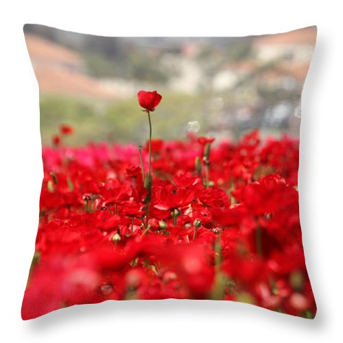 Red Flower Field Throw Pillow featuring the photograph Above The Crowd by Mary Ourada