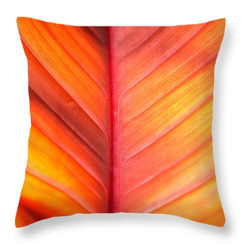 Pattern Throw Pillow featuring the photograph Abstract by Tony Cordoza