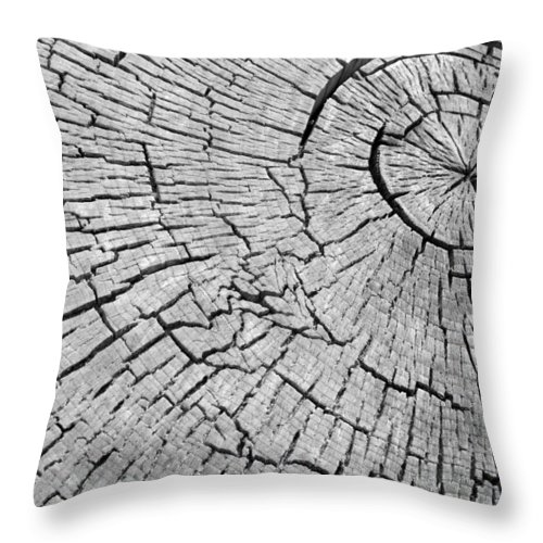 Trees Throw Pillow featuring the photograph Abstract Tree Cut by James BO Insogna