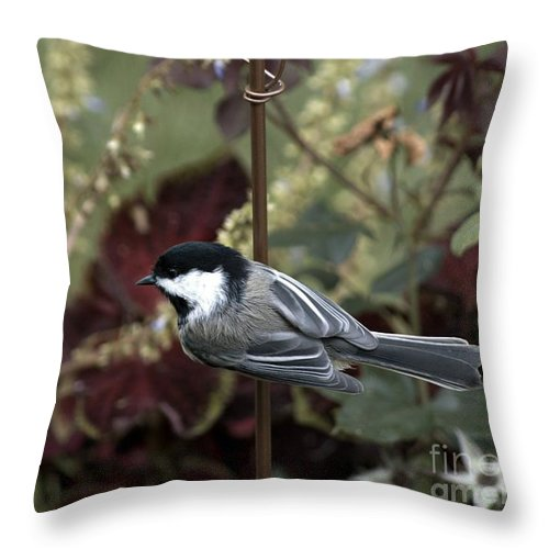 Chickadee Throw Pillow featuring the photograph Abundant Life by Catherine Melvin