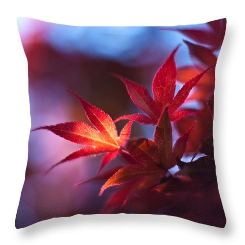 Acer Throw Pillow featuring the photograph Acer Kaleidoscope by Mike Reid