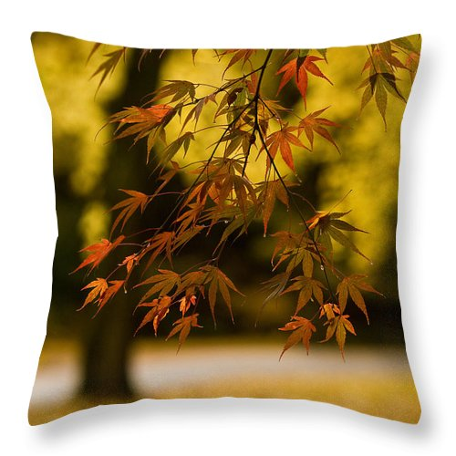 Acer Throw Pillow featuring the photograph Acers Turning by Mike Reid