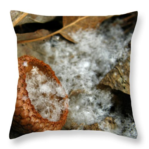 Acorn Throw Pillow featuring the photograph Acorn Cap Filled With Snow by Kimberly Mohlenhoff