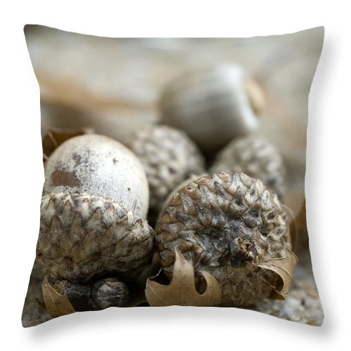 Acorns Throw Pillow featuring the photograph Acorns by Jessica Wakefield