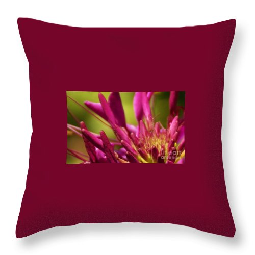 Flower Throw Pillow featuring the photograph Actiniaria by Linda Shafer
