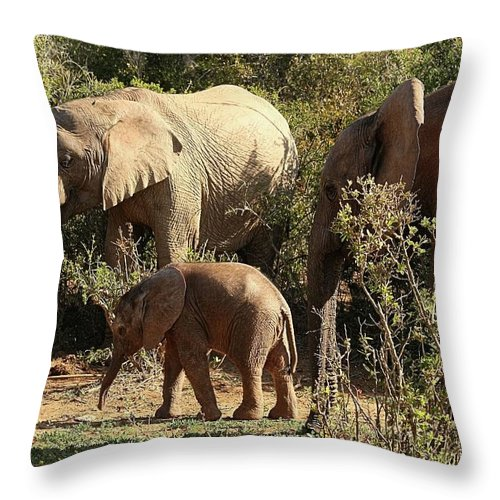 Elephant Throw Pillow featuring the photograph Addo Elephant Family by Jennifer Wheatley Wolf