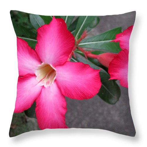 Flowers Throw Pillow featuring the photograph Adenium 2 by Cindy Kellogg