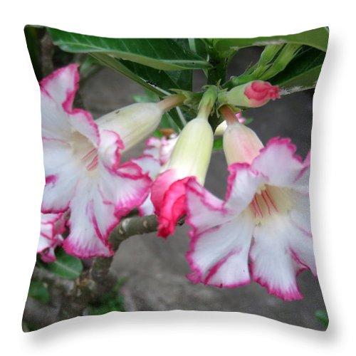 Adenium Throw Pillow featuring the photograph Adenium by Cindy Kellogg