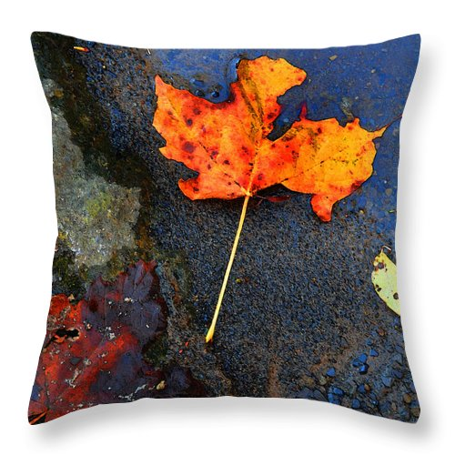 Berry Throw Pillow featuring the photograph Adirondack Season Change by Diane E Berry