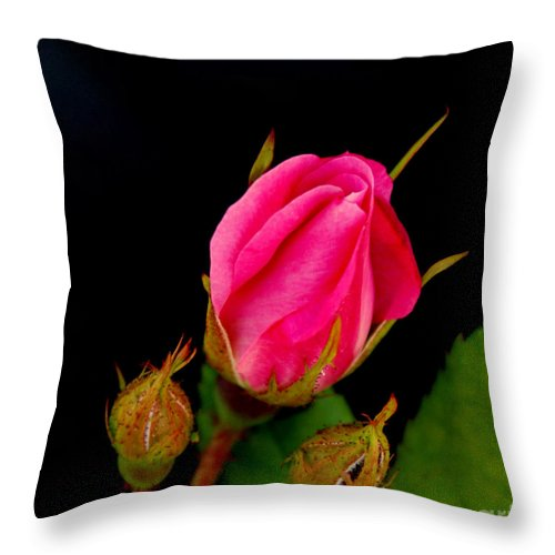Rose Throw Pillow featuring the photograph Admirers by Shelley Jones