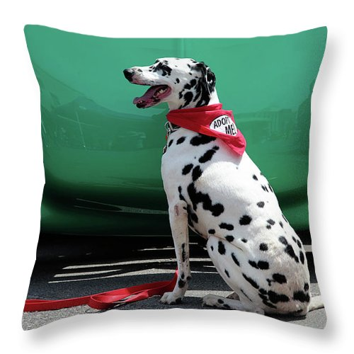 Dog Throw Pillow featuring the photograph Happy Dalmatian by Toni Hopper