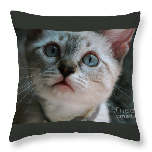 Cats Throw Pillow featuring the photograph Adorable Kitty by Kim Henderson