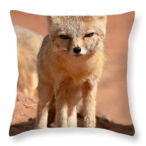 Fox Throw Pillow featuring the photograph Adult Kit Fox Ears And All by Max Allen