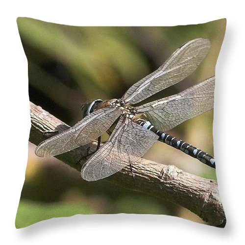 Dragonfly Throw Pillow featuring the photograph Aeshna Juncea - Common Hawker Taken At by John Edwards