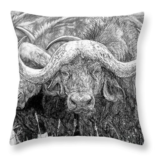 Cape Buffalo Throw Pillow featuring the drawing African Cape Buffalo by Dan Pearce