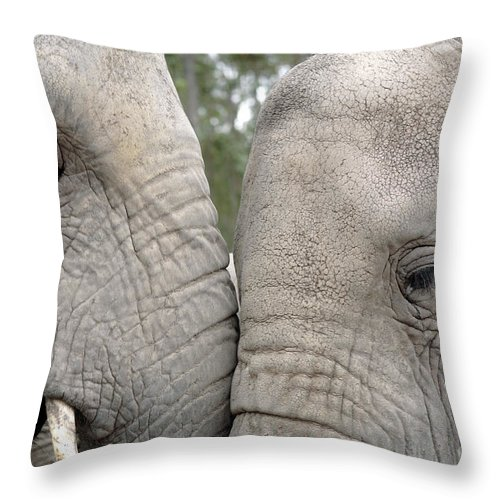 African Elephant Throw Pillow featuring the photograph African Elephants by Neil Overy