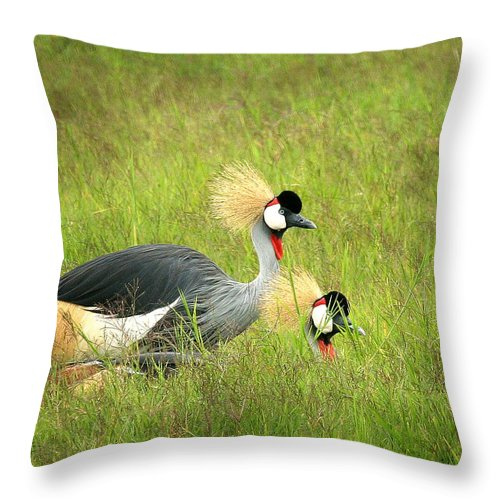 Crane Throw Pillow featuring the photograph African Gray Crown Crane by Joseph G Holland