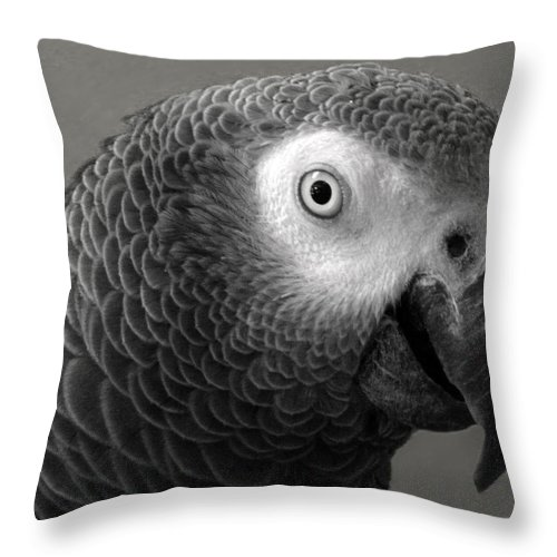 African Gray Throw Pillow featuring the photograph African Gray by Sandi OReilly