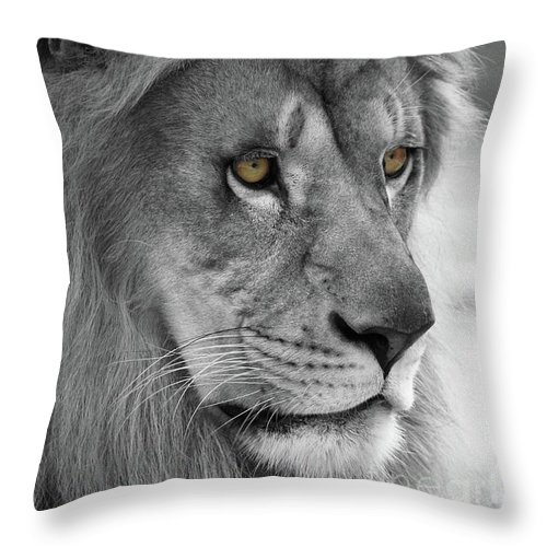 Lion Throw Pillow featuring the photograph African Lion #8 Black And White T O C by Judy Whitton