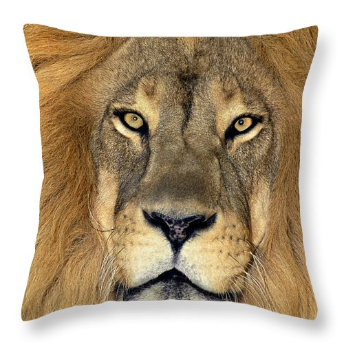 African Lion Throw Pillow featuring the photograph African Lion Portrait Wildlife Rescue by Dave Welling