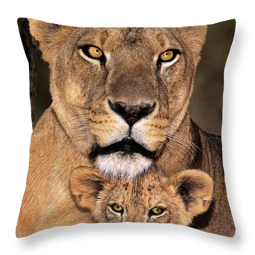 African Lion Throw Pillow featuring the photograph African Lions Parenthood Wildlife Rescue by Dave Welling