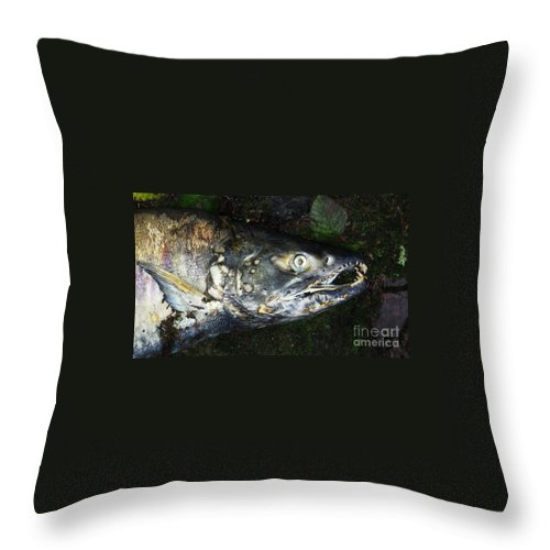 Photography Salmon Death Fish River Malahat Hatch Throw Pillow featuring the photograph After Death by Seon-Jeong Kim