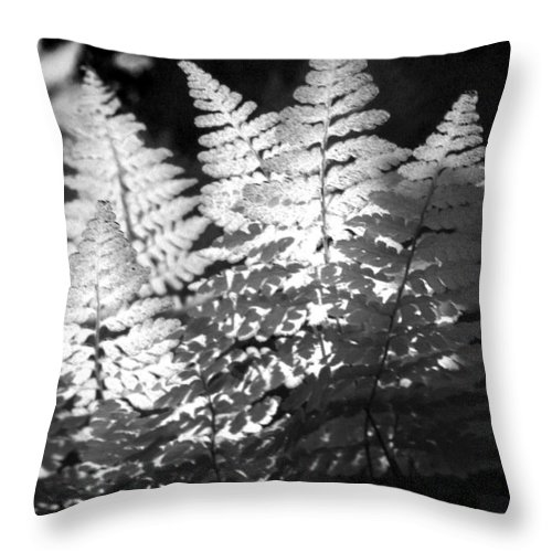 Fern Throw Pillow featuring the photograph After Glow by Randy Oberg
