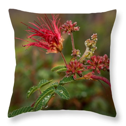 Architecture Throw Pillow featuring the photograph After The Desert Rain by Barbara Fagan Sullivan