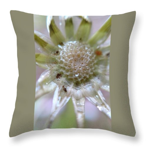 Flower Throw Pillow featuring the photograph After The Glitter Fades by Bruce Carpenter