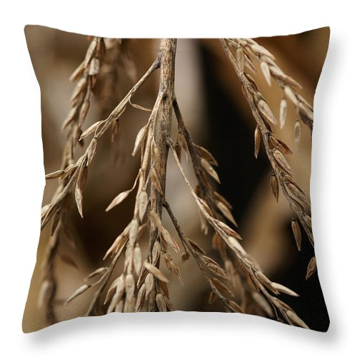 Corn Throw Pillow featuring the photograph After The Harvest - 1 by Linda Shafer