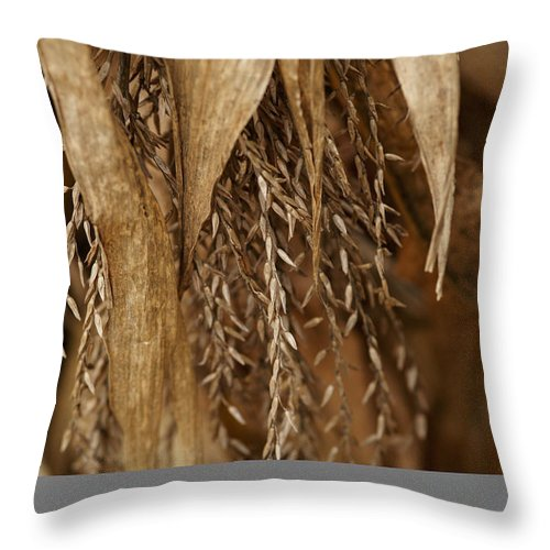 Corn Throw Pillow featuring the photograph After The Harvest - 2 by Linda Shafer