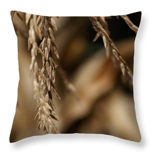 Corn Throw Pillow featuring the photograph After The Harvest - 3 by Linda Shafer