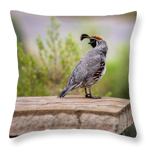 Arizona Throw Pillow featuring the photograph After The Rain by Cathy Jaramillo
