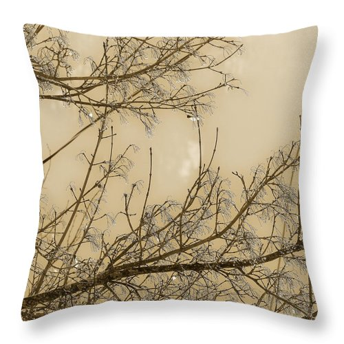 Rain Drops Throw Pillow featuring the photograph After The Rain I by Scott Ballingall