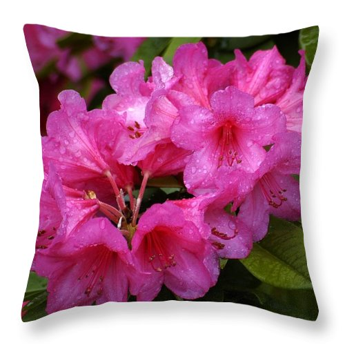Rhody Throw Pillow featuring the photograph After The Rain by Lori Seaman