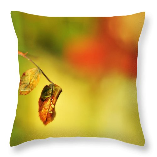 Rain Throw Pillow featuring the photograph After The Shower by Rebecca Sherman