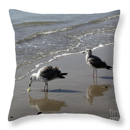 Beach Throw Pillow featuring the photograph Afternoon Snack by Kelly Holm