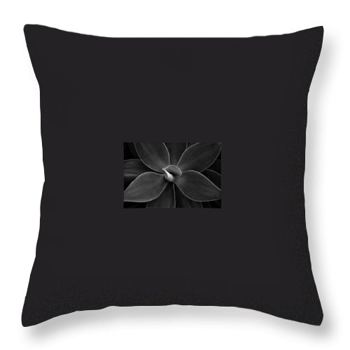 Agave Throw Pillow featuring the photograph Agave Leaves Detail by Marilyn Hunt