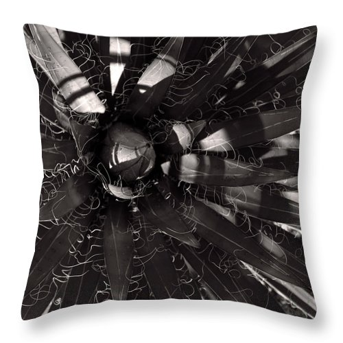 Agave Throw Pillow featuring the photograph Agave by Steve Bisgrove