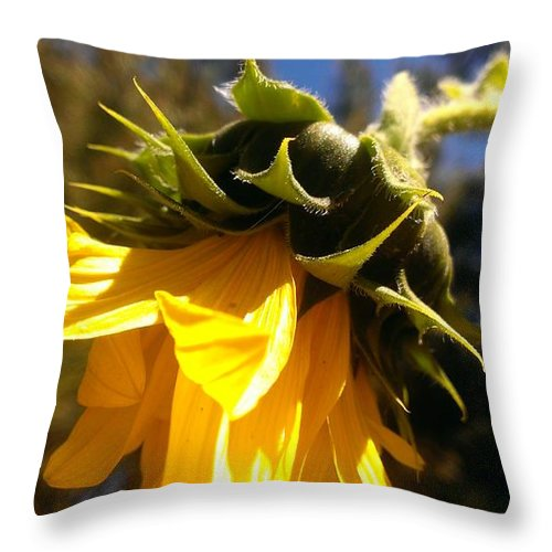 Sunflower Throw Pillow featuring the photograph Age Of Beauty by LKB Art and Photography