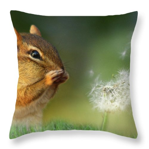 Chippy Throw Pillow featuring the photograph Ah-choo by Lori Deiter