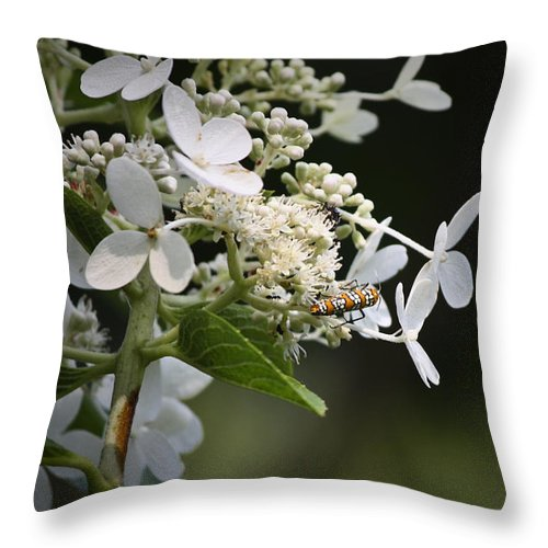 Ailanthus Throw Pillow featuring the photograph Ailanthus Webworm Moth 1 by Teresa Mucha